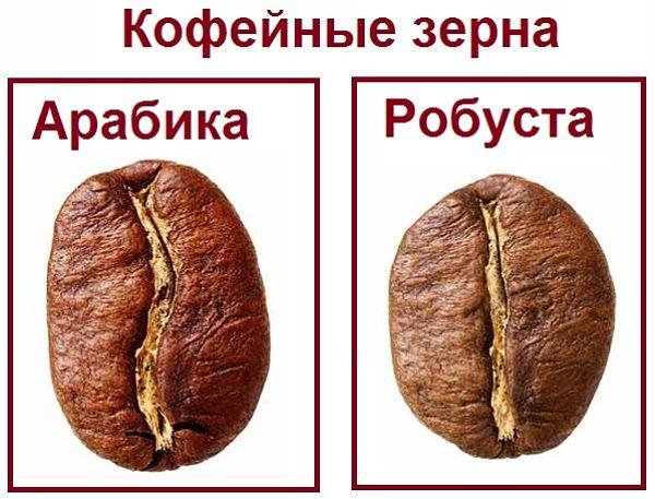 Кофе робуста - особенности выращивания и различия с арабикой