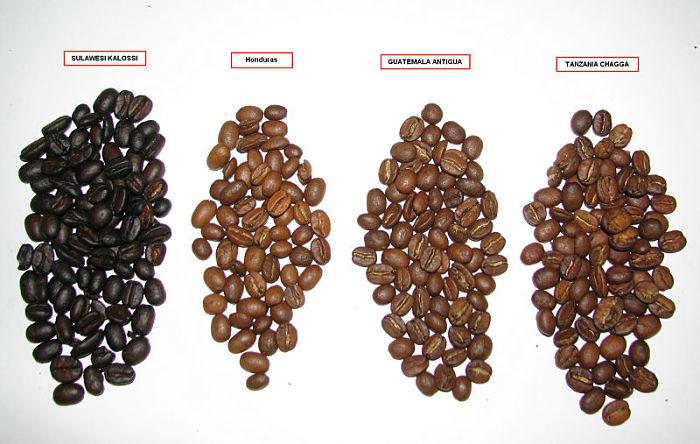 Сорта кофе. Основные критерии выбора кофе по его сорту